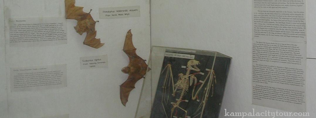 zoology-makerere