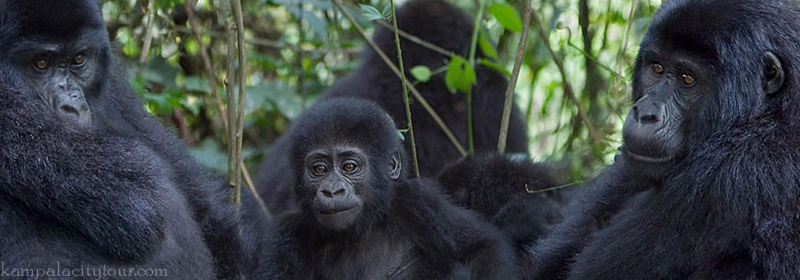 bwindi-forest-np